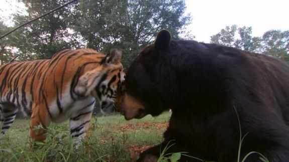 Daring Duos: Unlikely Animal Friends | LiveScience