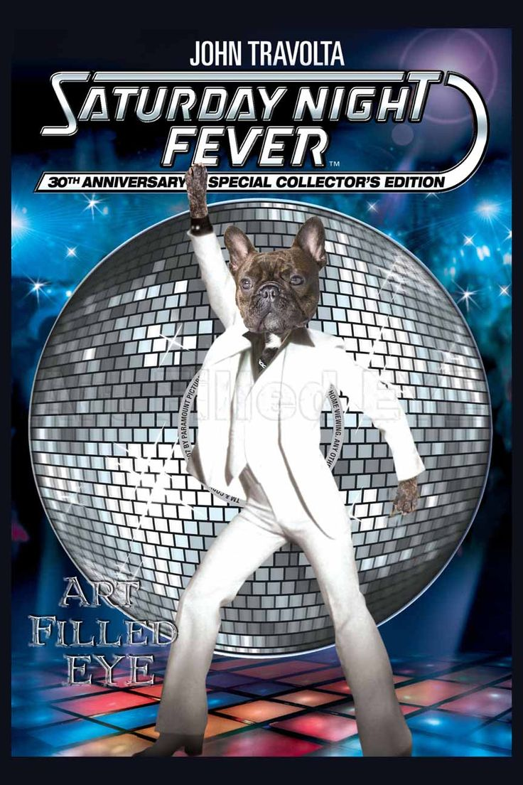 Pin By Nicole Dahmer On Frenchies Saturday Night Fever