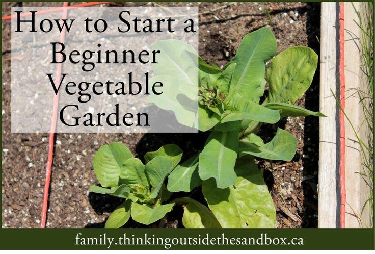 How To Start A Beginner Vegetable Garden Tots Family 400 x 300