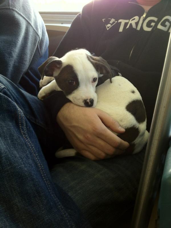 @jasonbentley reports: vicious animal on Muni!: Jasonbentley Reports, Vicious Animal, Bus, Pets, Warning