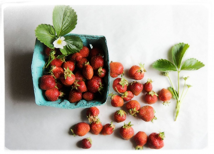 first strawberries - from Canal House Cooks: Fun Recipes, Aroma, Candy, Months Ears, Houses Strawberries, Farmers Marketing, Strawberries Seasons, Marketing Strawberries, Marketing Yesterday Th