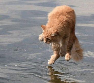 Kenapa Kucing Takut Air ? - http://kucingraas.co.id/kenapa-kucing-takut-air/