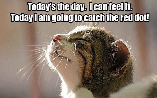: Cat, Thinking Positive, Quote, Red Dots, Kittens, The Dots, Helen Keller, Animal, Positive Attitude
