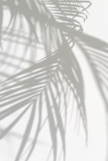 Black and white shadows of a green leaf