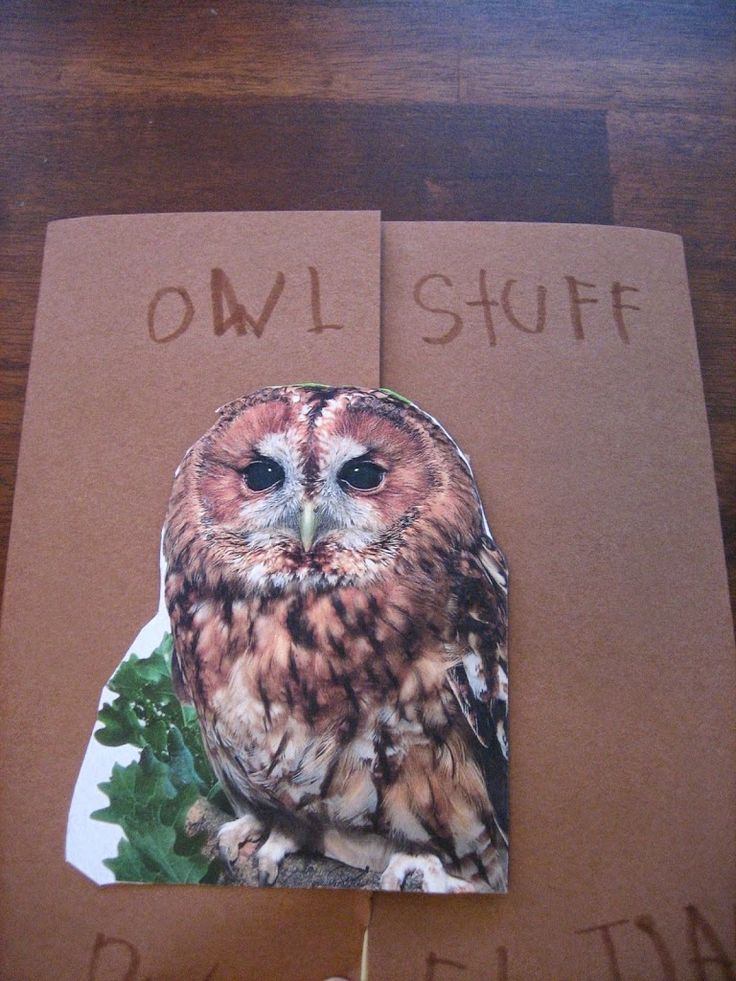 We had aHOOT OF A TIMElearning about Owls in thePreschool Learning Cornerwith many of our favorite Owl Books, the first and foremost beingOWL MOON, by Jane Yolen, it is truly enchanting with superior illustrations. The Lapbook turned out great and Seamus worked very hard to complete most of it on his own. Front Cover: Sawhet …