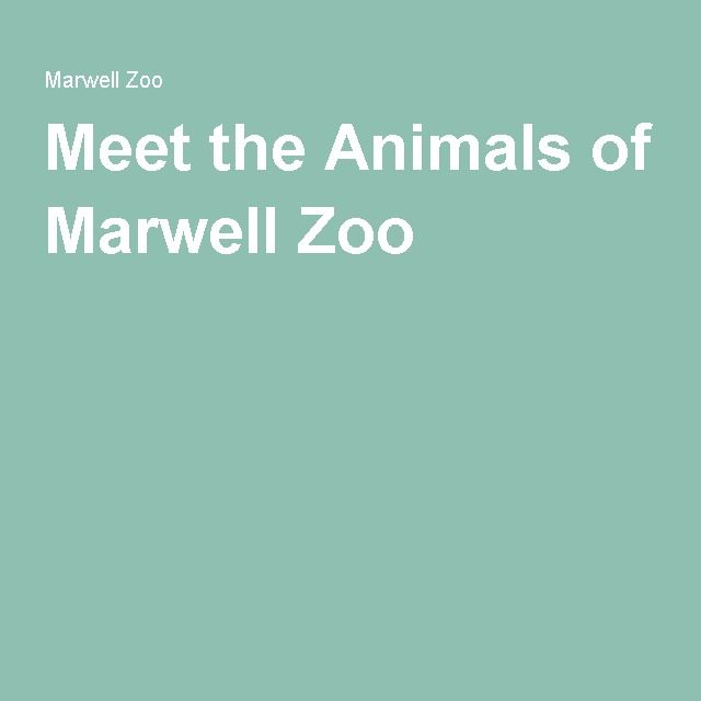 Meet the Animals of Marwell Zoo