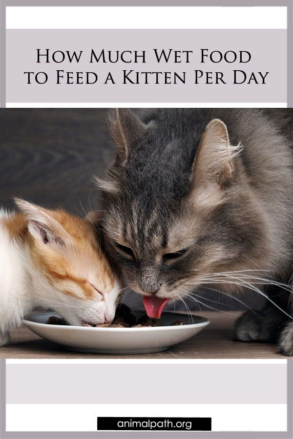 Vet Here S What Your Cat Should Be Eating Every Day Cats Indoor Pets Vets