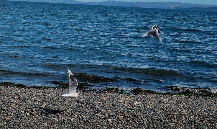 Juego de alas - Tenaún, Chiloé.
