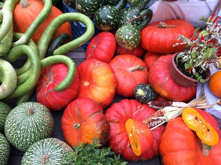 Dyniobranie, czyli masz babo dynie / Expedition for pumpkins