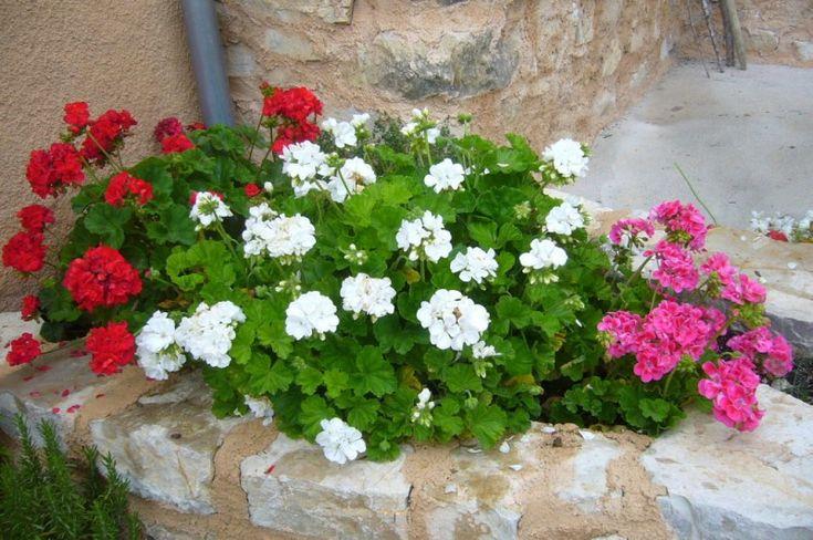 165 best consejos para la decoraci n de interiores y - Plantas de sombra para jardin ...