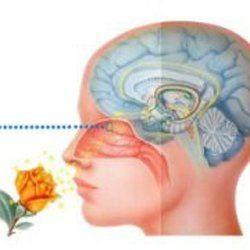 http://perfumeforme.ru/blog/vliyanie-zapaha-na-cheloveka  Влияние запаха на человека Они повсюду, даже дома у каждой семьи есть свой, неповторимый, запах. Однако человек даже не задумывается, насколько сильное влияние оказывают на него различные ароматы: они могут повысить работоспособность, помочь расслабиться, поднять настроение или, наоборот, вогнать в депрессию.  Подробнее читайте в нашем блоге