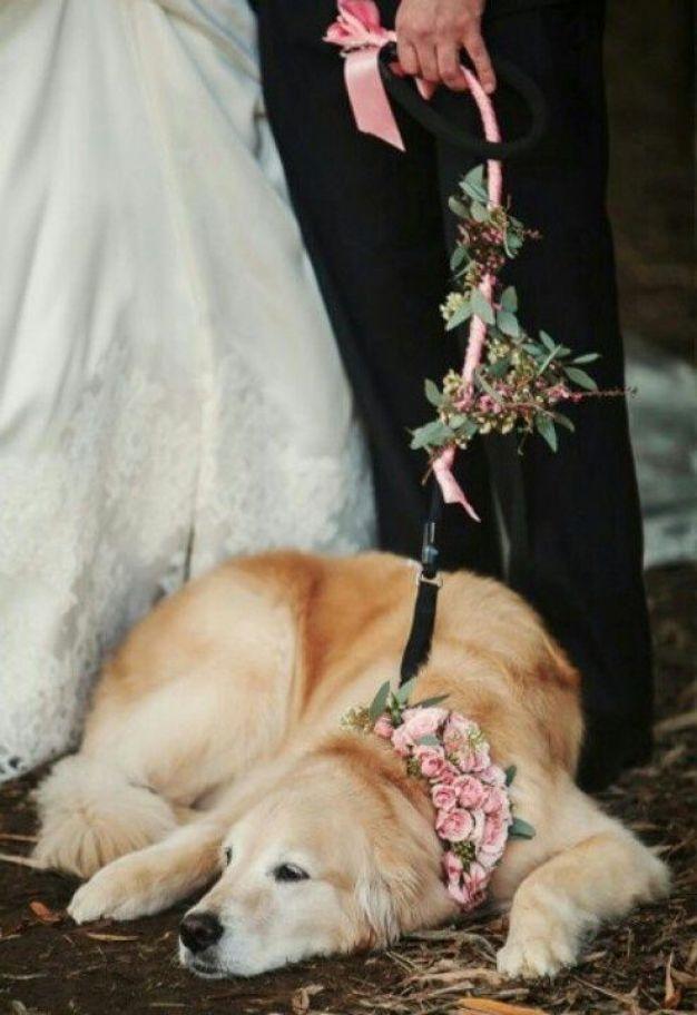 Cachorros casamento