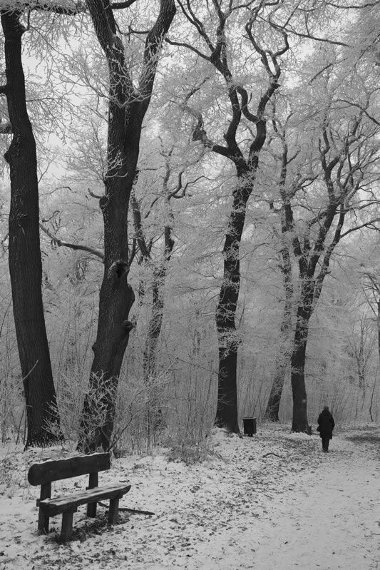 PeaceWhite Photography, Winter Trees, Art, Beautiful Places, Winter Wonderland, Trees Branches, Solitude Peace, Black And White Trees, Solitude And Peace