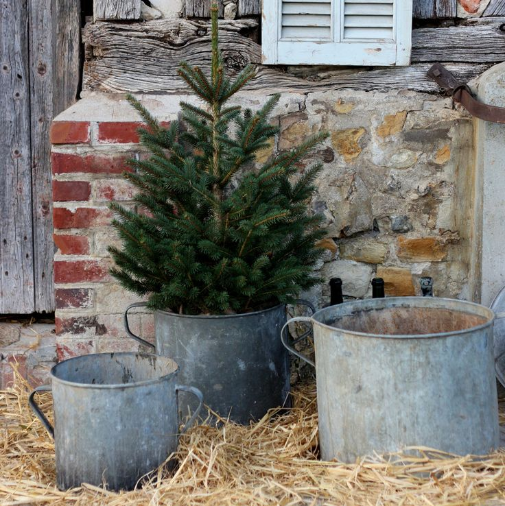 Best Christmas Tree Farms In Nc: Primitive, Colonial, & Country