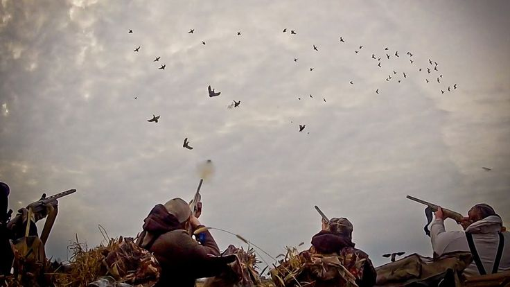 Waterfowl Hunting: So You Want To Be A Waterfowl Hunter - Fowled Reality