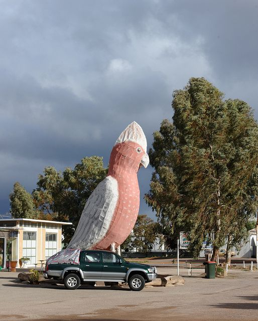 The Giant Cocky @ Kimba by badjonni, via Flickr • the big galah • Kimba South Australia • aussie big things South Australia