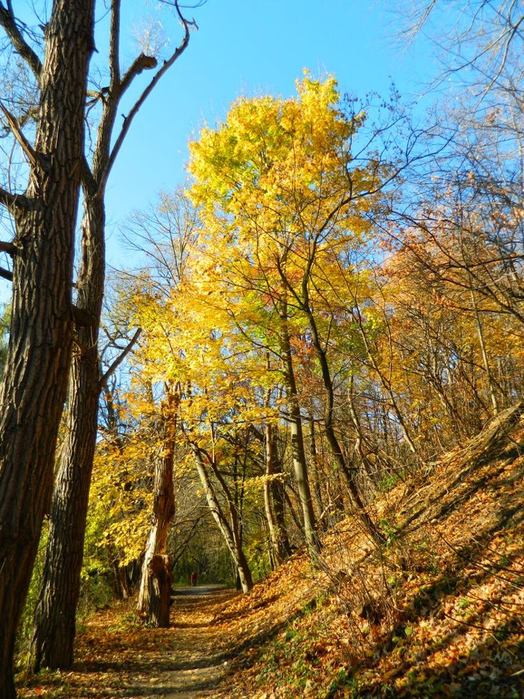 Fall foliage Taylor Creek Park by garden muses: not another Toronto gardening blog.