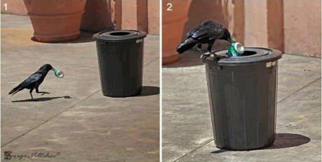 This crow is a better person than you...