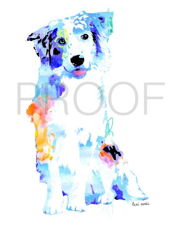 Meet Jacks, the playful, bright Australian Shepherd. He can leap to great heights to catch any frisbee, run through a dozen poles and dance on his