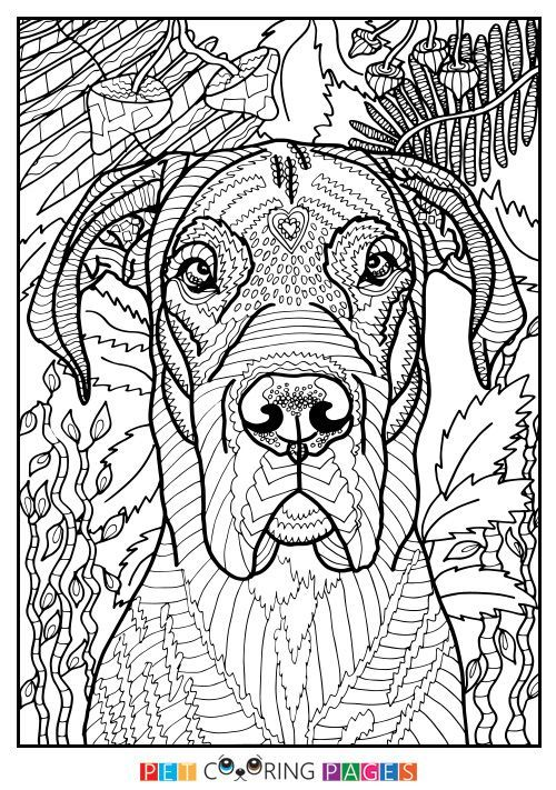Free Printable Great Dane Coloring Page Available For Download Simple And Detailed Versions Adults Kids
