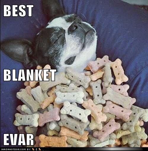 funny dog pictures - BEST BLANKET EVAR