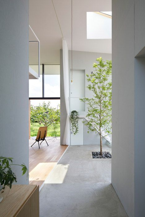 // Indoor tree. House in Ohno by Airhouse Design Office