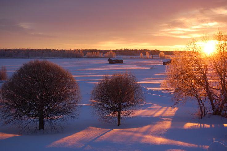 Winter wonderland - Närpes, Finland Photo:  Christina Enholm