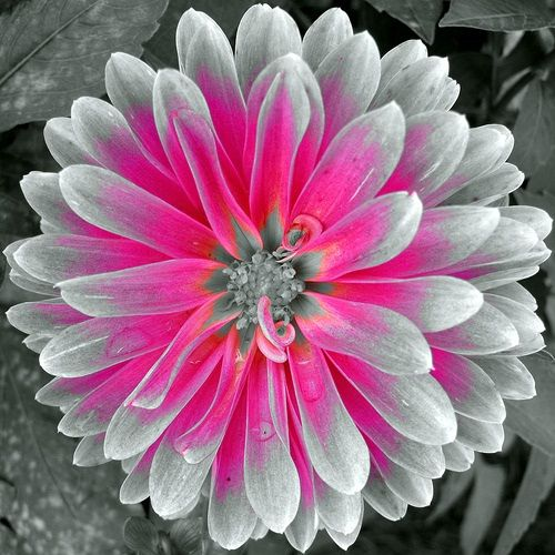 This Page Contains All Info About Black And White Flowers With Color Accents