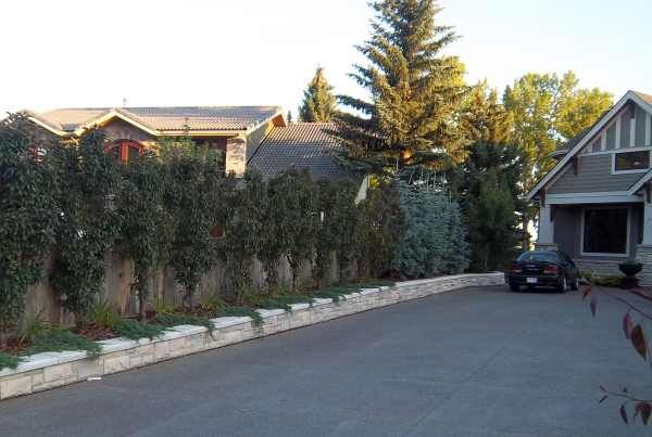 Effective driveway landscaping ideas for a narrow strip between houses that have longer driveways. The privacy fence is alive and partially concealed in the summer. Blue spruce provide a little more privacy towards the back . A low stone retaining wall makes a great driveway border.