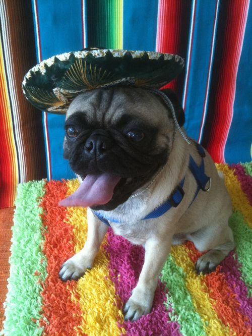 16 Puppies Who Are Definitely Ready For Cinco De Mayo