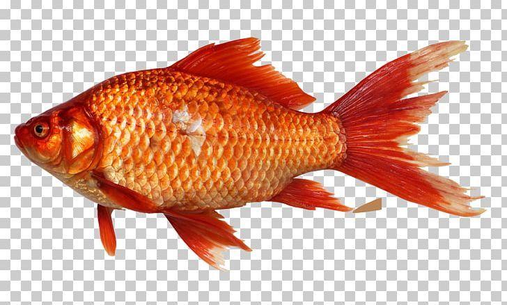 Fish Png Fish Fish Png Colorful Fish