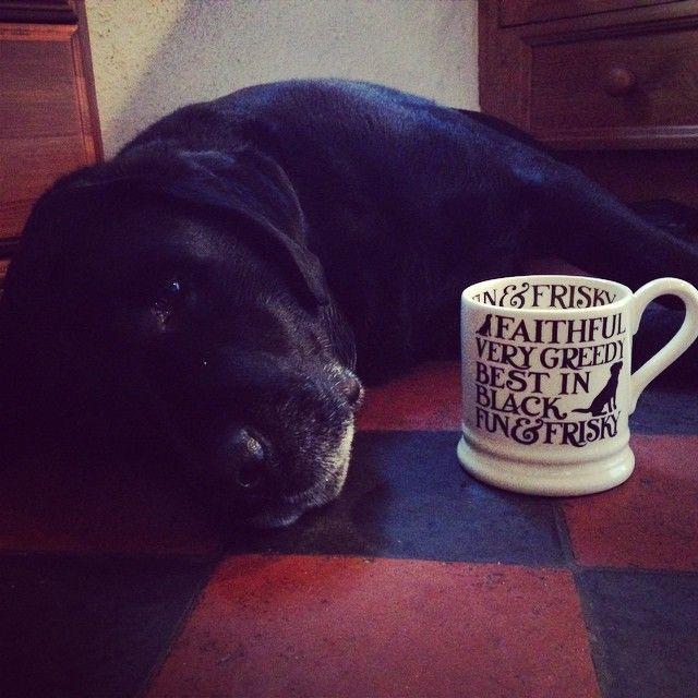 """ Love him #emmabridgewater #labrador #lovehim #earlgrey #morningtea """
