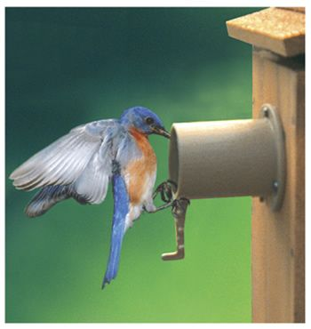 Installed these baffles on my bluebird houses two years ago.  Have had great success against the raccoons!