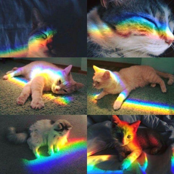 только коты с радугой на лице учителю, вкусные расписные
