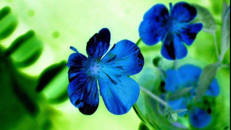 Blue Flower HD Backgrounds   WallpapersCharlie