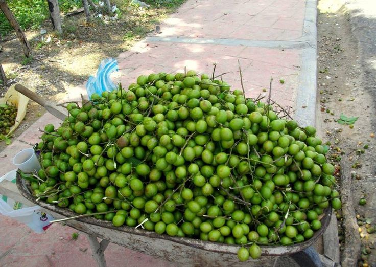fruits in puerto rico easy healthy fruit dip