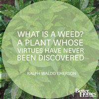 """What is a weed? A plant whose virtues have never been discovered."""