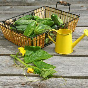 http://ru.123rf.com/Olesia Sarycheva: Чем подкормить огурцы