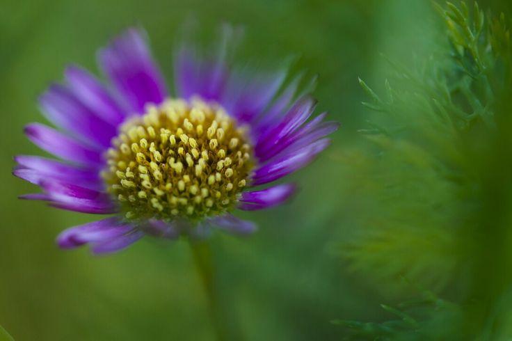 Macro de flor