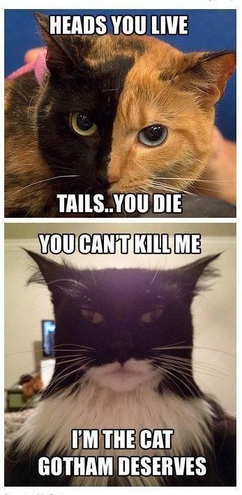 Batcat and Two-Face cat.