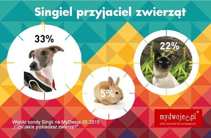 #pies #kot #zwierzak #zwierzę #pupil #love #animal #królik #przyjaciel #singiel #wybór #myszka #chomik #świnka  Zapewne, myśląc o zwierzętach dla Singli, jako pierwszego zobaczysz oczyma wyobraźni psa. A może jednak najlepszym przyjacielem Singla jest kot, który rozładuje każde napięcie cichym pomrukiem? Zobacz, kto wiernie towarzyszy Singlom w ich drodze do miłości.  https://www.mydwoje.pl/…/Inform…/Singiel-przyjaciel-zwierzat
