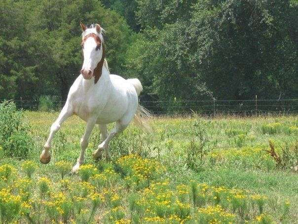 Best  Horse Saddles For Sale Ideas On   Horse Tack