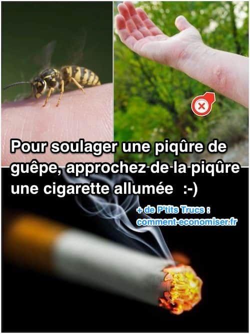 Les 251 meilleures images du tableau anti insectes et anti parasites sur pinterest - Soulager une piqure de guepe ...