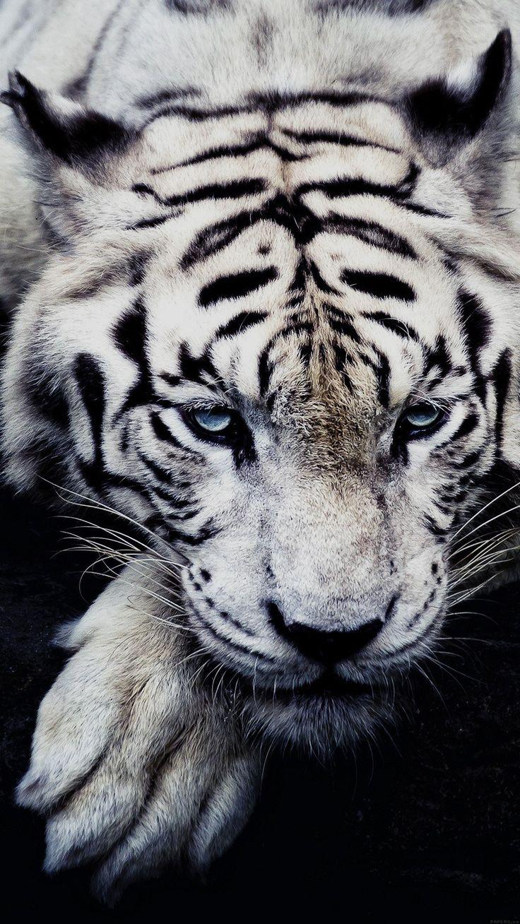 Best Wallpaper Marvel White Tiger - 7d89b201c694ddd22751952fb2508278--mobile-wallpaper-iphone-wallpaper  Image_771192.jpg