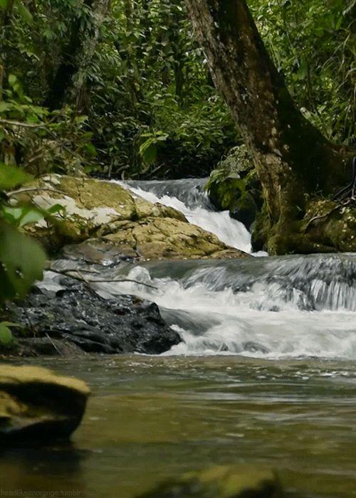 """headlikeanorange: """"  Parque Ecológico do Tororó, Brazil """""""