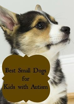 Thinking of getting a therapy dog? Check out the best small dog breeds for kids with autism!