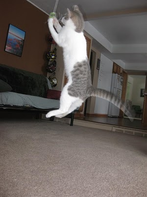 Pictures And Video Of My Cat Flying Through The Air Hes Young Likes To Cool Catsceiling Fansvideos
