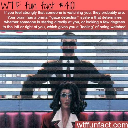 Someone is watching you!?!  ...Gonna have to get BACK to you on this One!  -WTF fun & weird facts