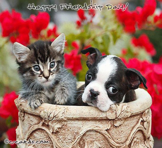 Good Morning Dear Friend.