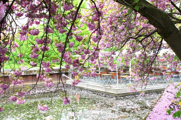 Hamburg Bergedorf, tree, Schweinske Restaurant, channel,